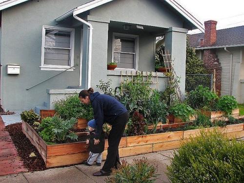 Berkeley front yard