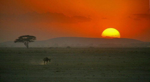Sunset over the Kenyan savanna